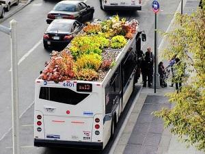 tuintje op de bus