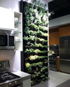 groenten groeiend aan de wand in de keuken